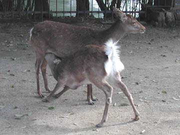 deer360.jpg