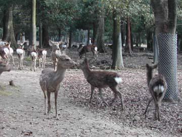 deer3602.jpg